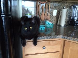 Nico kitchen counter