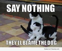 blame dog