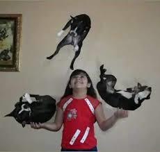 cat juggling
