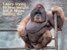 monkey lose weight