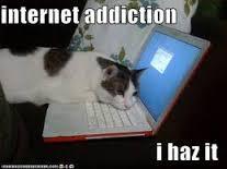 research cat