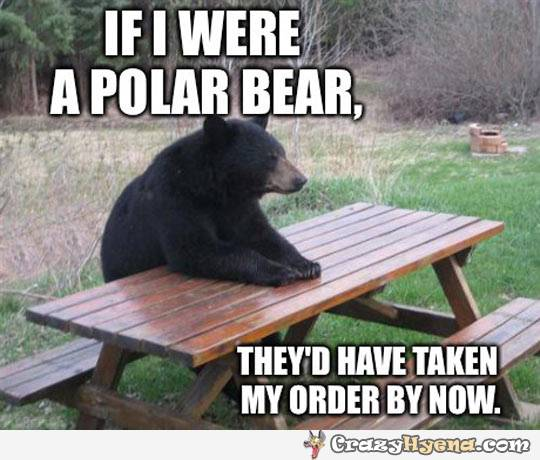 funny-discrimination-grizzly-bear-polar