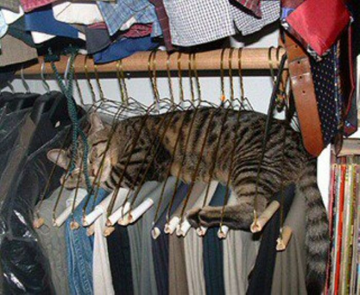 silly-cat-in-coat-hangers