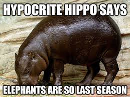 hippo5