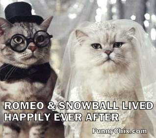 funny-pictures-cat-wedding