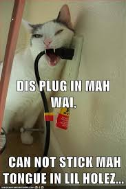 cat chew on plug
