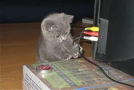 cat plug1