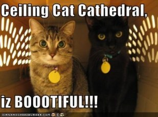 cat cathedral