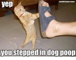 stepinpoo