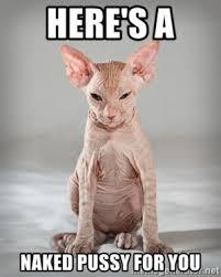 bald cat1